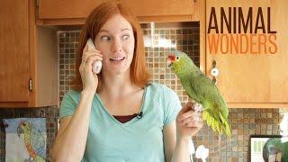 Parrot Copy Cat