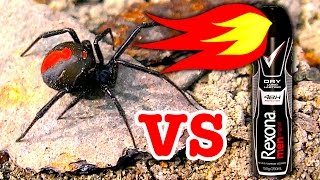 Deadly Redback Spider Flamethrower Non Chemical Spider Control Fast And Effective