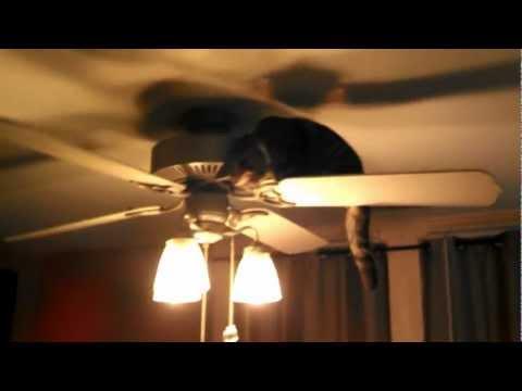 Cat in ceiling fan theteenline cat ceiling fan www energywarden net mozeypictures Image collections