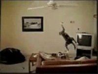 Cat Swinging from Ceiling Fan - YouTube