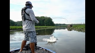 Angry Beaver Attacks my lure while Bass Fishing - Potomac River FLW Tour Practice Day