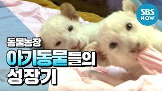 [동물농장] '아기동물들의 성장기' / 'Animal Farm' Review