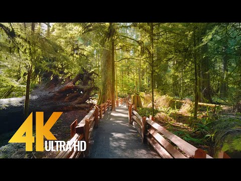 4K Virtual Hike through Canadian Forest (with Nature Sounds) - Incredible Nature of British Columbia