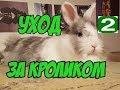 Уход за кроликом// обои// провода// прогулки// общение// Часть 2