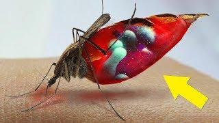 ¿Qué le sucede a tu sangre dentro de un mosquito?
