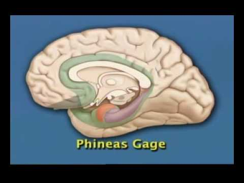 Limbic System and Prefrontal Cortex UofT Psy 290 4 of 8