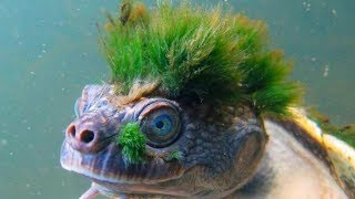 STRANGEST Animals That Are Hard To Believe Are REAL!