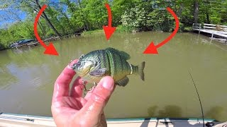 New Favorite Swimbait gets DESTROYED!