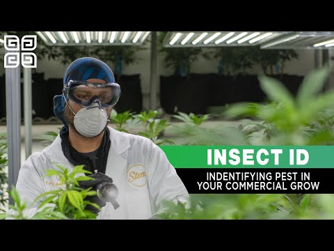 Identifying Insects and Pests in Your Commercial Grow - Gnats, Mites, and More!