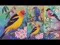 Easy Bird Acrylic Painting Tutorial ″Western Tanager″ Songbird Series