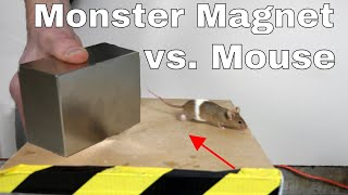 What Does a Giant Monster Neodymium Magnet do to a Mouse?