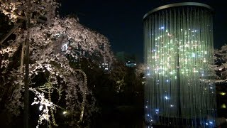 teamLab's Crystal Fireworks and cherry blossoms at Roppongi Hills
