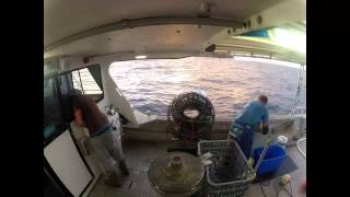 Lobster fishing - The Chase