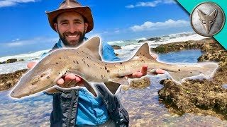 Catching a SHARK by HAND!