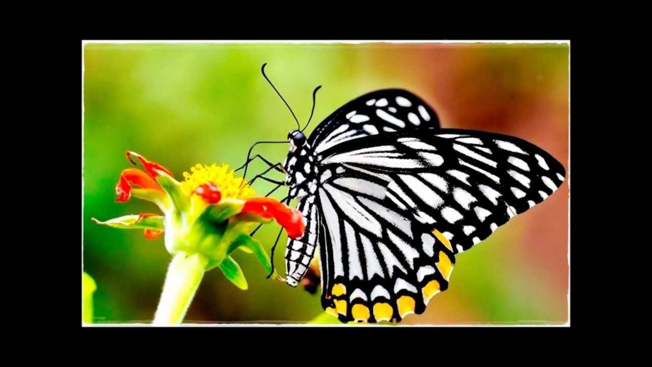 兒 歌 -- 蝴 蝶 - YouTube