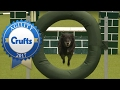 Agility - Crufts Singles Heat - Medium (Jumping) | Crufts 2017