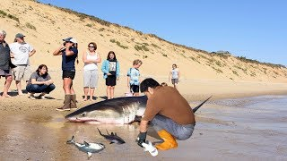 Amazing Man Help Dead Shark Give Birth To 3 Baby Shark On The Beach