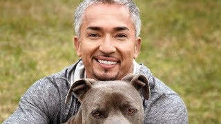 The Untold Truth Of The Dog Whisperer