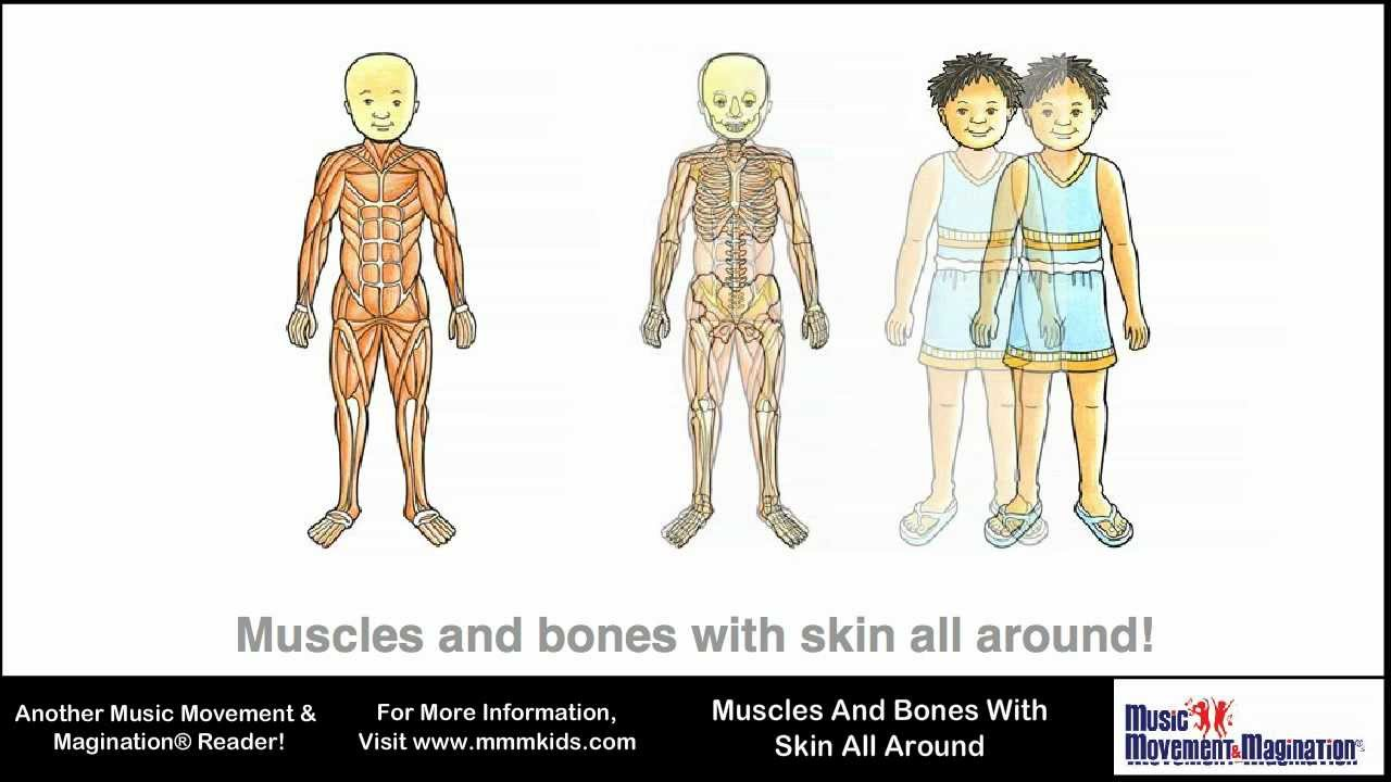 What Body Systems Are Related To Or Affected By Rickets Rickets