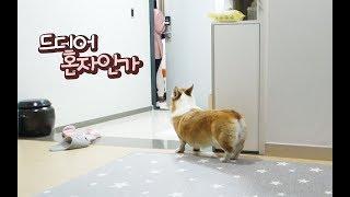 집에 혼자있는 강아지를 관찰하다 소름이 돋았습니다 ㅣ 아리의 이중생활🐶 (ft.소요리 전구)