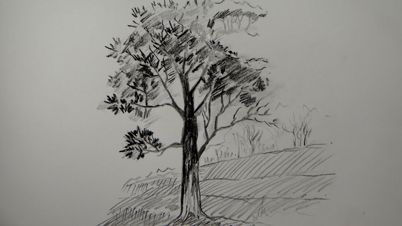 Beautiful Girl Sketch Wallpaper How To Draw A Tree Using Pencil A Simple Tree Youtube