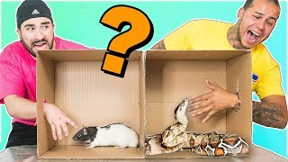 Whats in the box CHALLENGE !!!! (ANIMALS)