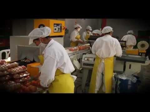 Higiene y Manipulacin de Alimentos Cap 04mp4  YouTube