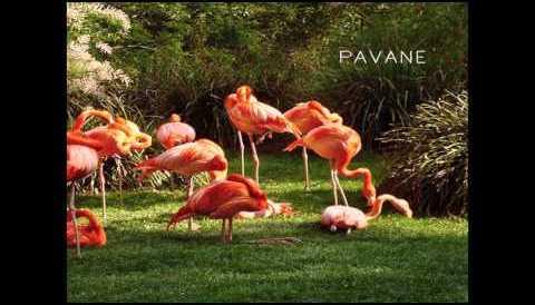 Download Music PAVANE - La Danse de Daphnis