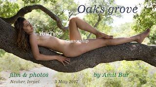 Oaks grove by Amit Bar