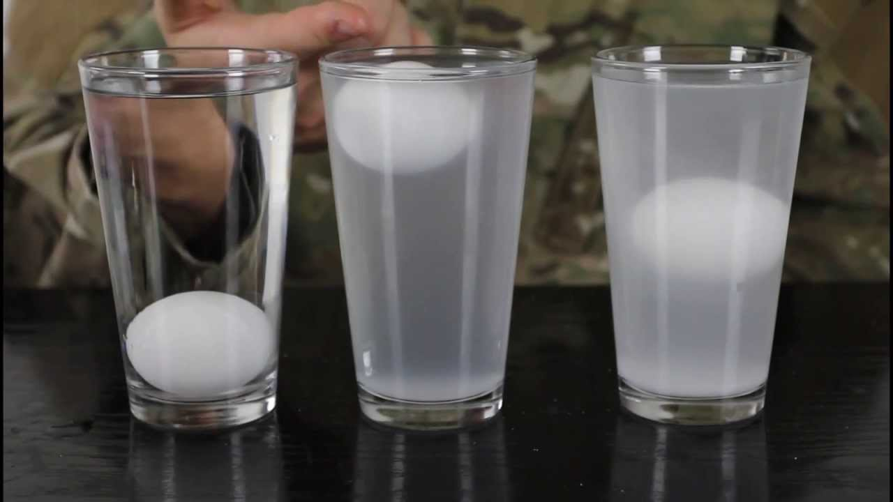 Eggs  Salt Water  Water Density Science Experiment  YouTube