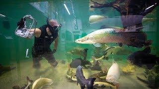 Swimming In Worlds Largest EXOTIC Aquarium!! (Hand feed fish)| Jiggin' With Jordan