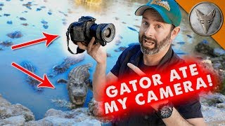 Gator Ate My Camera!