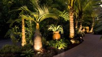 Palm Tree Landscaping Ideas - Home Design Architecture