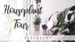 Houseplant Tour!   December 2018