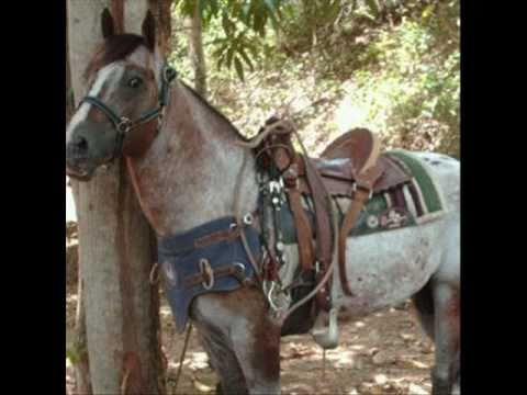 El GuasnEl caballo record en el 2010  YouTube