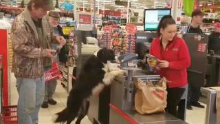 Dog Picks Out Own Treats