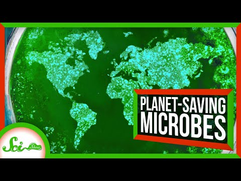 6 Microbes Saving the Environment