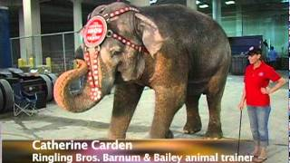 picture of Elephant Trainer