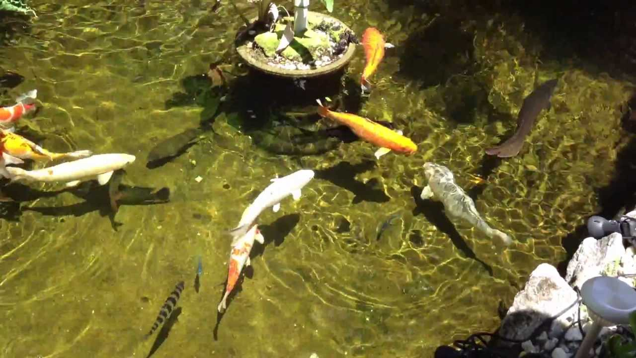 Build Koi Pond Yourself