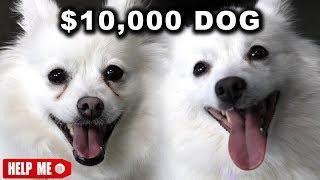 Watch $10,000 DOG VS. $1 DOG Video