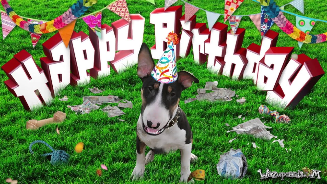 HAPPY BIRTHDAY Bull Terrier Terry YouTube