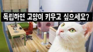 원룸에서 고양이를 잘 키울 수 있을까? (힘든 이유, 최소 면적, 2마리? 냄새?)