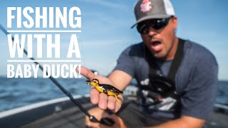 Baby Duck Lure Catches Them!