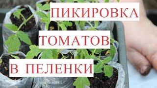 Пикировка Томатов в Пеленки (25.03.17).
