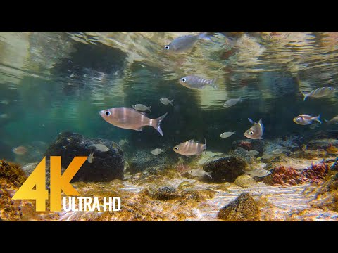 4K Small Fish of the Pacific Ocean - Nature Relax Video - Short Preview