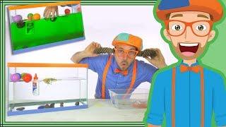1 Hour Blippi Compilation | Educational for Children - Sink or Float