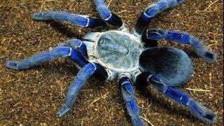 Top 10 Most Venomous Spiders