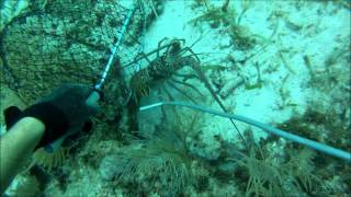 Florida Keys Lobstering and Spearfishing 2015