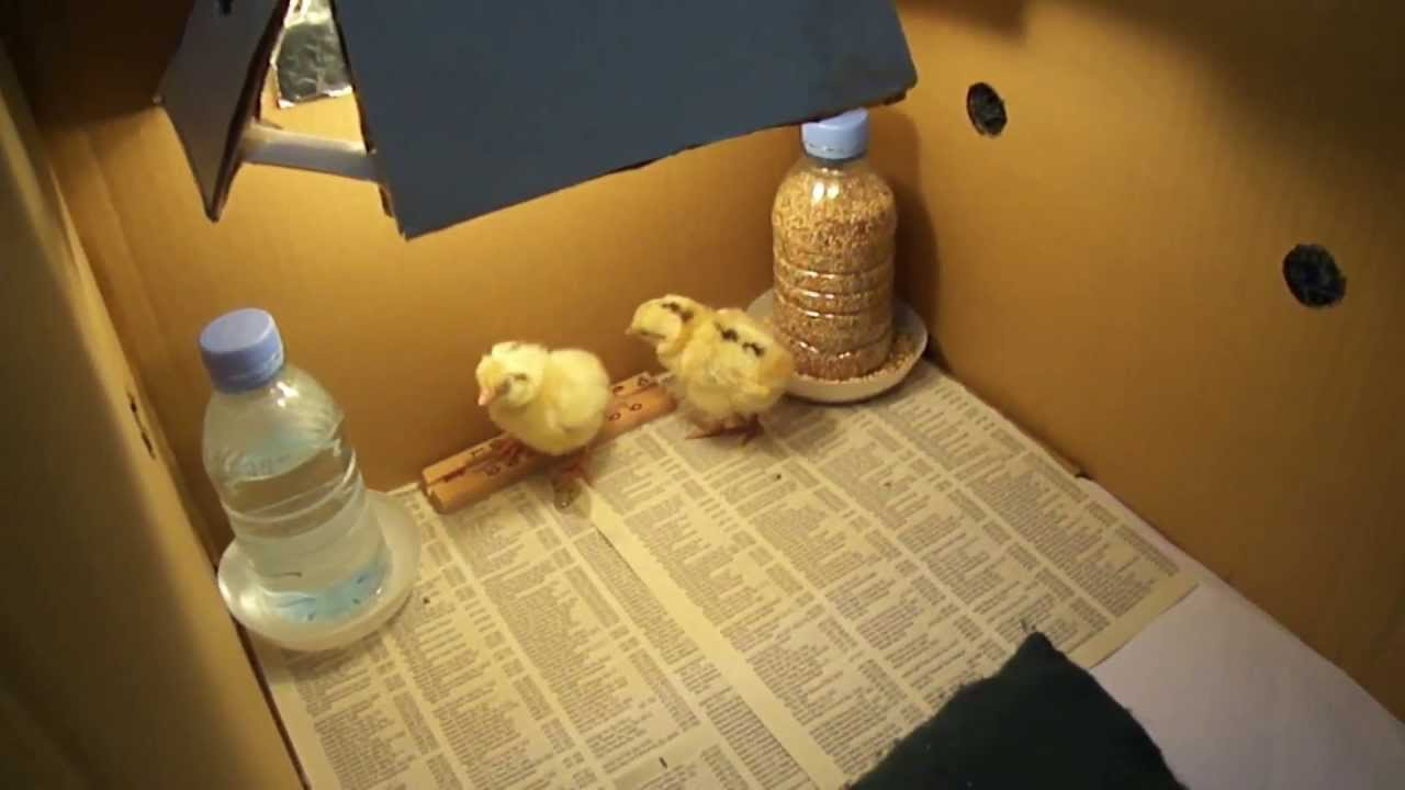 Chicken Baby Feeder Diy