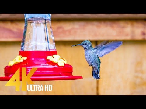 4K Backyard Animals - 10-bit Color Relaxation Video with Birds Chirping - Short Version